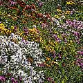 Fall Flower Garden by Robert Ullmann
