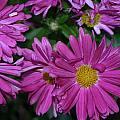 Fall Flowers In Bloom by Leann DeBord