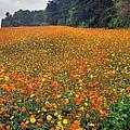 Fall Flowers by Janice Spivey