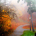 Fall Fog by Anne Ferguson