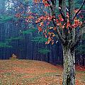 Fall Fog by Burney Lieberman