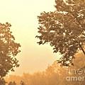 Fall Foggy Morning by Marsha Heiken