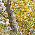 Fall Foliage by Brandy Fenenga