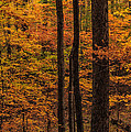 Fall Forest by Charlie Choc
