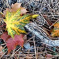 Fall Forest Floor by Will Borden
