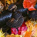 Fall Fungi by Barbara Northrup