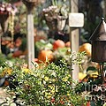Fall Garden by Living Color Photography Lorraine Lynch