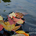 Fall Gathering by Susan Herber