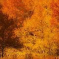 Fall Glory by Dorothy Cunningham