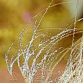 Fall Grass by Artist and Photographer Laura Wrede