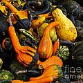 Fall Harvest by Carol F Austin