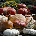 Fall Harvest Colorful Gourds 7965 by Terri Winkler