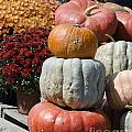 Fall Harvest Colorful Gourds 7968 by Terri Winkler