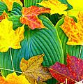Fall Hosta by David Yunker