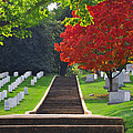 Fall In Arlington Cemetery  by Brittany Horton