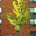 Fall In Rochester by Joel Lau
