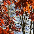 Fall In The City 1 by Alanna DPhoto