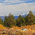 Fall In The Sierra by Lynn Bauer