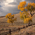 Fall In Yellowstone by Nicholas Palmieri