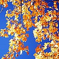 Fall Is In The Air by Larry Ricker