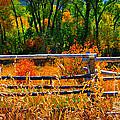Fall  by Janice Westerberg