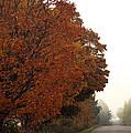 Fall Laneway by Elaine Mikkelstrup