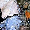 Fall Leaf Abstract by Maria Urso