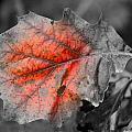 Fall Leaf by Rick Rauzi