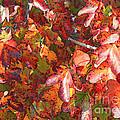 Fall Leaves - Digital Art by Carol Groenen