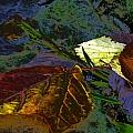 Fall Leaves Abstraction by Beth Akerman