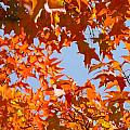Fall Leaves Art Prints Autumn Red Orange Leaves Blue Sky by Baslee Troutman