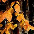 Fall Leaves by Denise Keegan Frawley