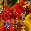 Fall Leaves Flp by Jim Brage