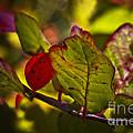 Fall Leaves by Kim Henderson