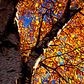 Fall Leaves by Kristin  Renbarger