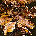 Fall Leaves Part Five by Al Cash