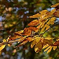 Fall Leaves Part One by Al Cash