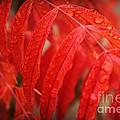 Fall Leaves Red 3 by Leslie Kinney