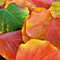 Fall Leaves by Sheila Kay McIntyre