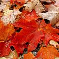 Fall Leaves by Suzanne DeGeorge