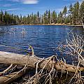 Fall Logs On Reflection Lake by Greg Nyquist