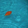 Fall... by Mario Celzner