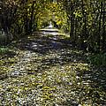 Fall On Macomb Orchard Trail by LeeAnn McLaneGoetz McLaneGoetzStudioLLCcom