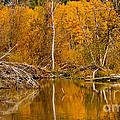 Fall On Taylor Creek by Mitch Shindelbower
