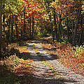 Fall On The Wyrick Trail by Denise Romano