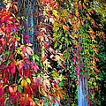 Fall Palette by Mariola Bitner