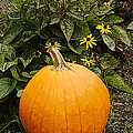 Fall Pumpkin by Kathleen Struckle