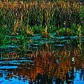 Fall Reflection by Edward Peterson