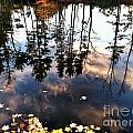 Fall Reflection Of Pines by Michelle Hawk