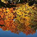 Fall Reflectionsin Michigan by LeeAnn McLaneGoetz McLaneGoetzStudioLLCcom